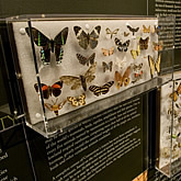 Photo of butterfly collection seen at The Connecticut Museum of Natural History