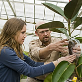 Photo of Mark H. Brand, Professor of Horticulture instructs a student in a procedure at the Floriculture Greenhouse